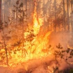 Steps to Protect Your Home From Wildfire Damage wildfire in a forest